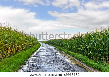Country road between corn fields just after rain - stock photo