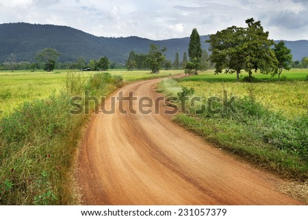 Country road between rice field - stock photo