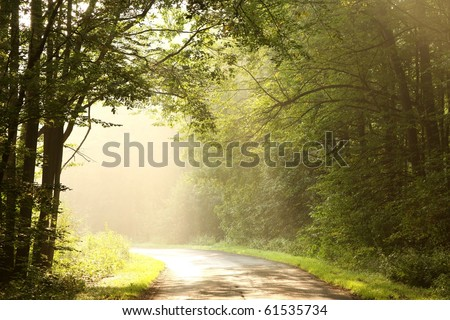 Country road in a deciduous forest on a foggy September morning. - stock photo