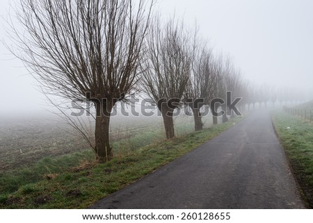 Country road in a rural landscape with a row of bare willow trees. It is early in the morning of a  foggy day at the end of the winter season. - stock photo