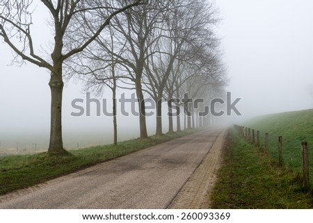 Country road in an endless rural landscape with a row of bare trees. It is early in the morning of a  foggy day at the end of the winter season. - stock photo