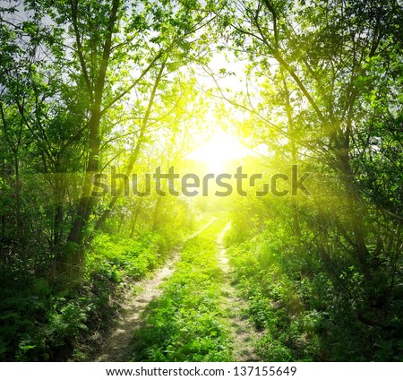 Country road in deep forest and sunlight