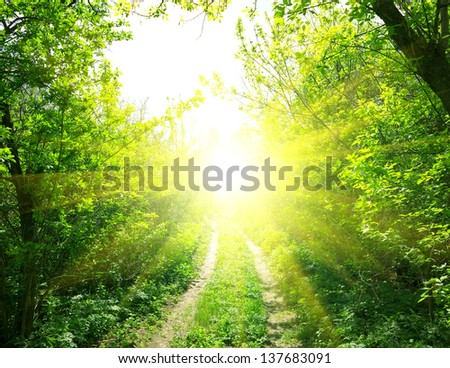 Country road in deep forest and sunlight - stock photo