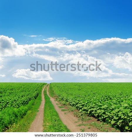 country road in green fields with sunflowers under cloudy sky - stock photo