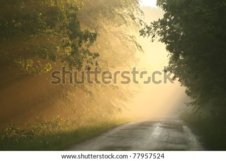 Country road in spring forest surrounded by fog resulting from heavy rain at dusk - stock photo