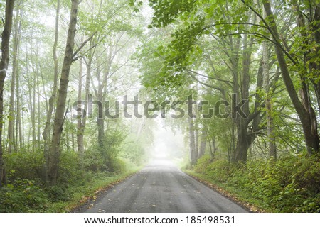 Country Road in the Fog. A rural country road lined with full foliage trees has a welcoming feel to the landscape. - stock photo
