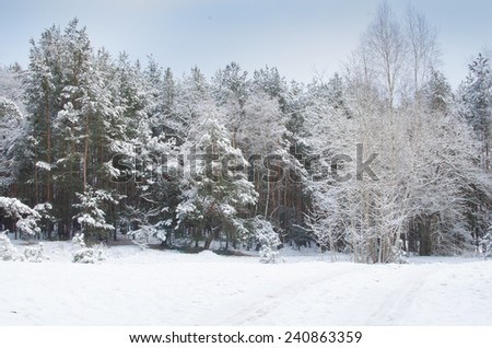country road in winter forest