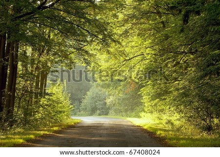 Country road lead by deciduous forest. Photo taken in August. - stock photo