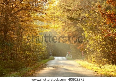Country road leading along the autumn trees lit by the rays of the setting sun.