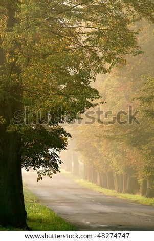 Country road leading among autumn oak trees in the morning sunlight. - stock photo