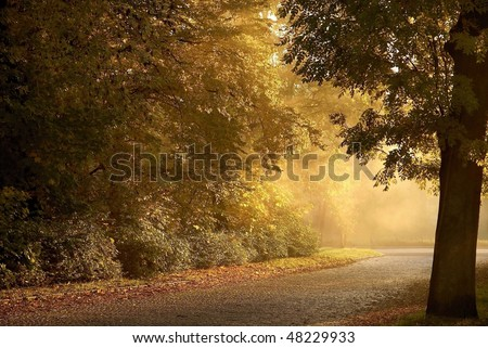 Country road leading among autumn trees in the light of the setting sun. - stock photo