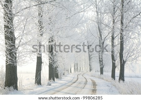 Country road leading among frosted trees on a sunny December's morning. - stock photo