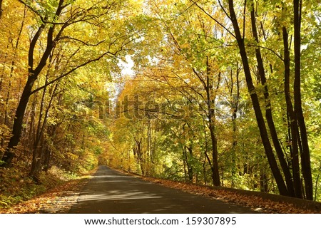Country road leading through the autumn forest on a sunny day. - stock photo