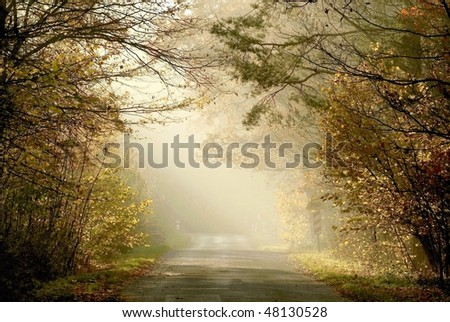 Country road leading through the misty forest in the rays of the setting sun. - stock photo