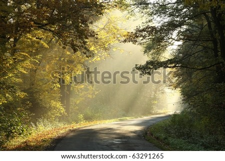 Country road leading through the picturesque autumn forest on a misty morning. - stock photo