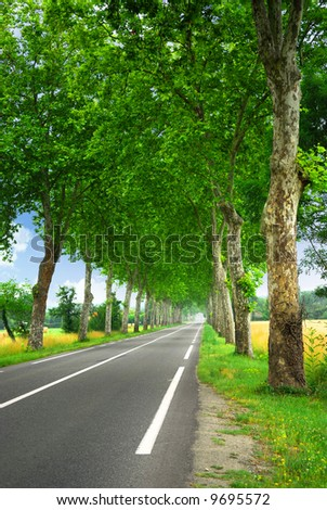 Country road lined with sycamore trees in southern France - stock photo