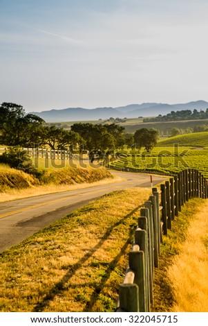 Country Road Next to California Vineyard - stock photo