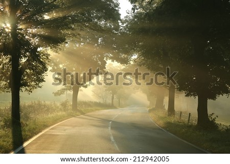 Country road on a misty morning. - stock photo