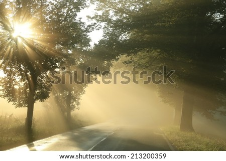 Country road on a misty morning.