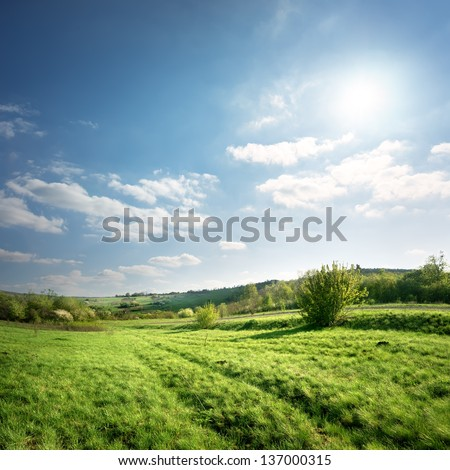 Country road on a spring green meadow