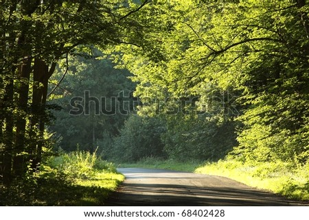 Country road running through the deciduous forest on a early autumn morning. - stock photo