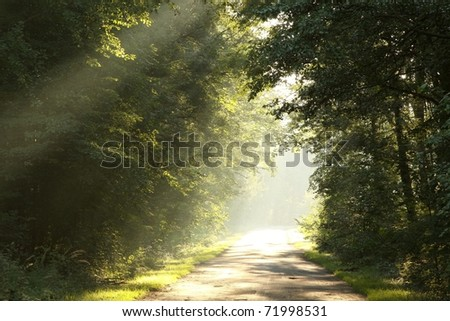 Country road running through the deciduous forest on a foggy morning. - stock photo