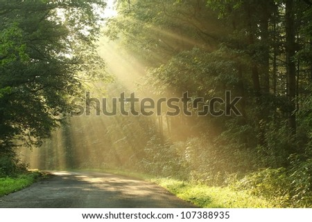 Country road running through the spring deciduous forest at dawn. - stock photo