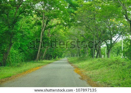 Country road running through tree alley. - stock photo