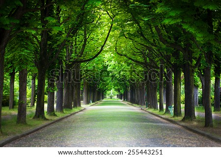 Country road running through tree alley in a beautiful summer day - stock photo