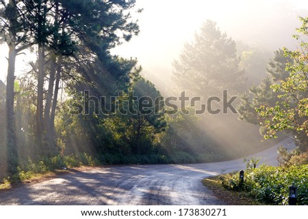 Country road running through tree from thailand - stock photo