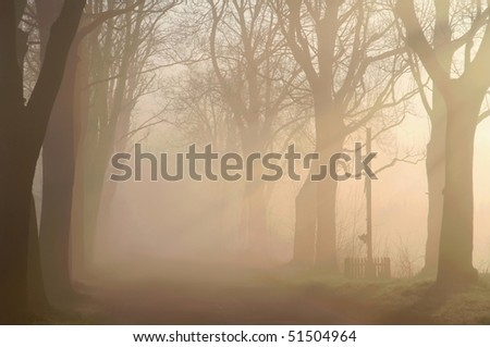 Country road surrounded by morning mist with the sunlight crossing the trees. - stock photo