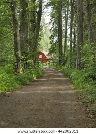 Country road surrounded by trees - stock photo