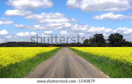 country road, Sweden - stock photo
