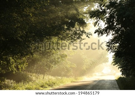 Country road through a spring forest at dawn. - stock photo