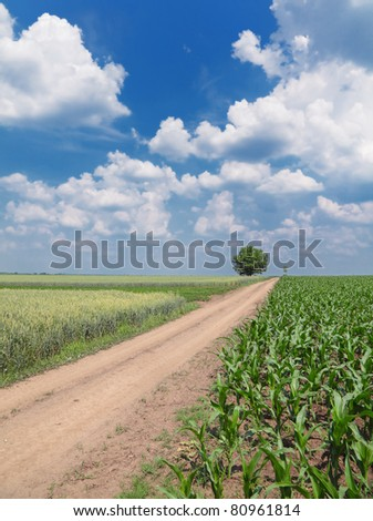 Country road through corn and wheat field - stock photo