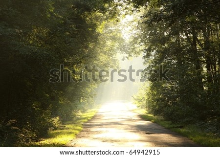 Country road through rich deciduous forest backlit by the rising sun. - stock photo