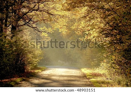 Country road through the autumn forest with oak trees backlit by the rays of the rising sun. - stock photo