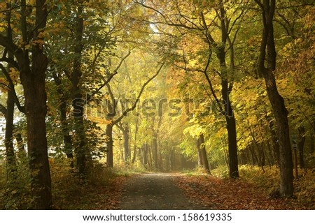 Country road through the autumnal forest in the morning. - stock photo