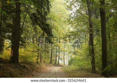 Country road through the woods in early autumn.