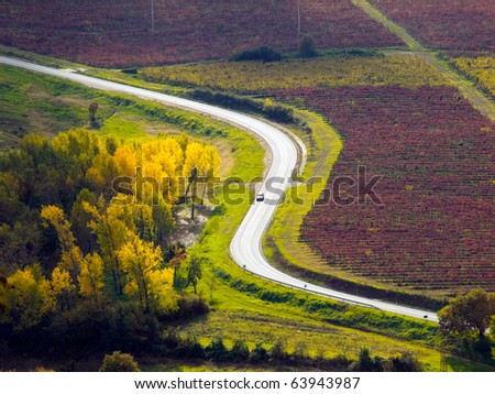 Country road through vineyards and fields bathed in fall colors somewhere in Istria, Croatia. - stock photo