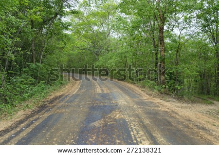 Country Road To The Jungle - stock photo