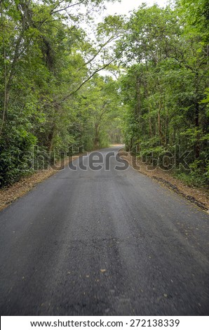 Country Road To The Jungle