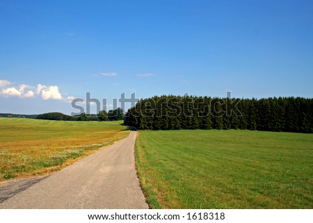 country road with fields and forest