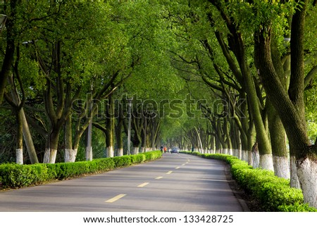Country road with trees along - stock photo