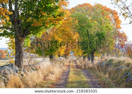 Country road with trees in autumn colors - stock photo
