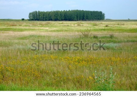 country scene with grove, Serbia - stock photo