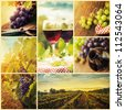 Country series. Collage of rustic wine, grapes and vineyard images. Autumn concept with red wine glasses, wine bottles, vineyard landscape and grapes in nature.