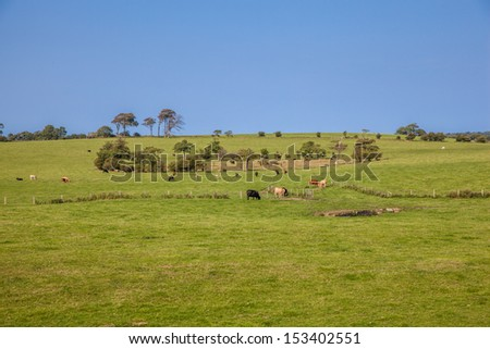 Country side in wales - stock photo