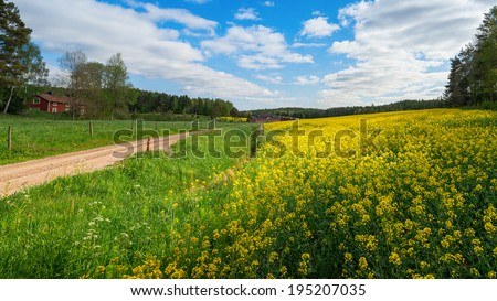 Countryroad with yellow rapefields and red farmhouses in sweden, panoramic view - stock photo