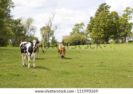 Countryside - stock photo